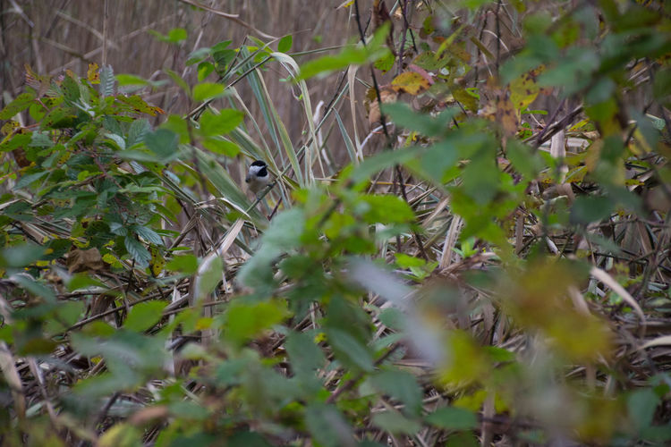 Autumn Green Color Nature Vines Bird Briars. Fall Foliage Greenery Outdoors Season  Thickets