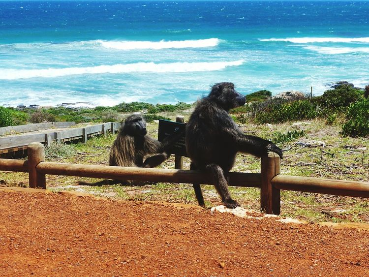 The Great Outdoors With Adobe Monkeys Monkeyisland Sea View Nature's Diversities People Of The Oceans Enjoying Life EyeEm Gallery Animals Are The Best Friends Gone Surfing Eye On Detail Natural Light Portrait EyeEm Best Shots - Nature EyeEm Best Shots EyeEm Nature Lover EyeEm Best Edits Two Is Better Than One Original Experiences Summertime waiting game Showcase June Miles AwayEye For Detail From My Point Of View On The Way Break The Mold Live For The Story