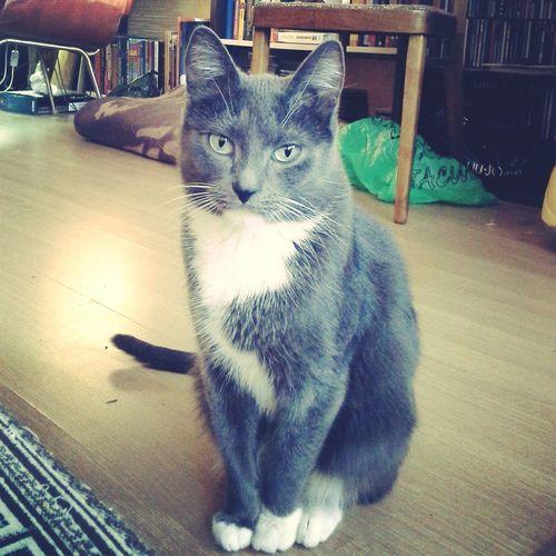 Cat MyLovelygirl