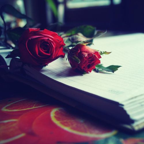 Close-Up Of Red Roses On Book