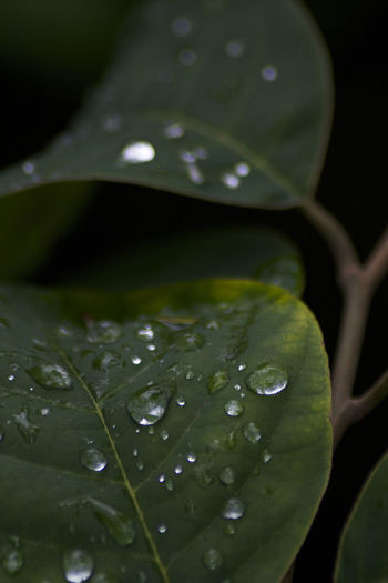 Lluvia en el Jardin Botánico de Bogotá Beauty In Nature Bogotacity Bogotá Botany Close-up Colombia Colombia ♥  Drop Extreme Close-up Fragility Freshness Green Color Growth Ig_colombia Leaf Leaf Vein Leaves Nature Plant Purity Selective Focus Softness Tranquility Water Wet