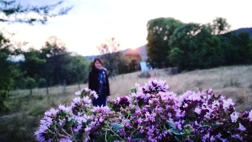 Walking in the forest~ Flower Nature Purple Beauty In Nature OutdoorsFreshness Walking Landscape Sunset Colors Leisure Activity Springtime Plant Blossom Sky Goodday Travel Explore The World Landscapes Mountain Hiking Romanian Forest Mother Nature Herb Holding Natural Medicine