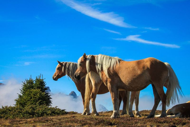 Seiseralm Alm Pferd Horse Clouds Sky And Clouds Südtirol Mountains Clouds And Sky Blue Sky Sky_collection Sky Landscape Landscape_photography Landscape_Collection Nature Nature_perfection Naturelovers Naturephotography Nature Photography Nature_collection Photography Photoaddict Photooftheday Blue
