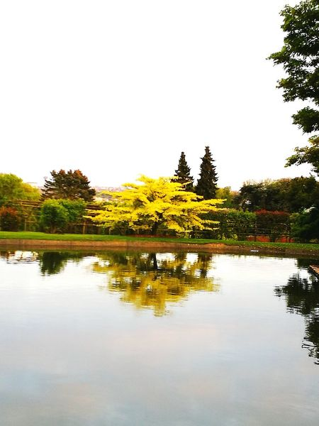 Reflection Tree Lake Nature Day Serres De Laeken (Brussels). Water Reflection Tranquility Tree Beauty In Nature Nature