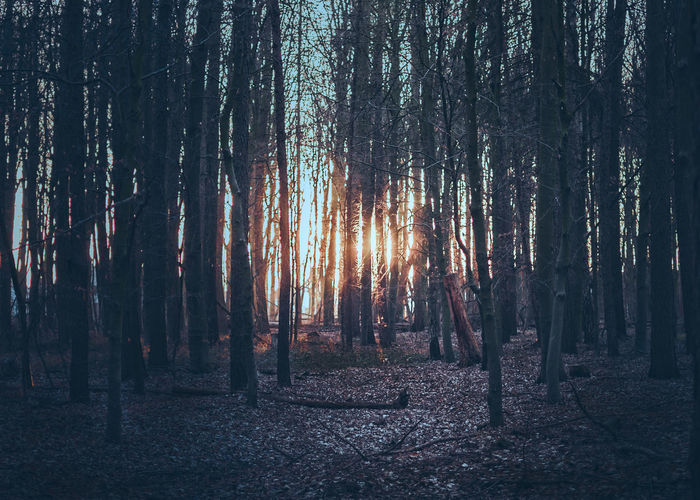 Last lights in the German Woodlands. Beauty In Nature Day First Eyeem Photo Forest Growth Landscape Nature Nature On Your Doorstep Nature Photography Nature_collection Naturelovers Nikonphotographer Nikonphotography No People Outdoors Scenics Sky Sunset Tranquil Scene Tranquility Tree Tree Area Tree Trunk WoodLand WoodLand