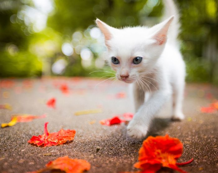 First walking step. Kitten Cute