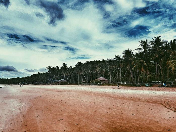 Tree Sky Palm