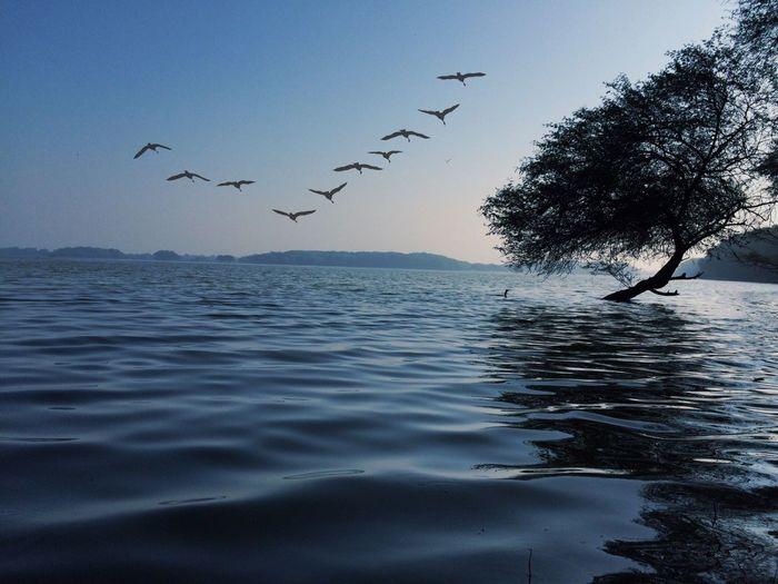 Birds | Nature