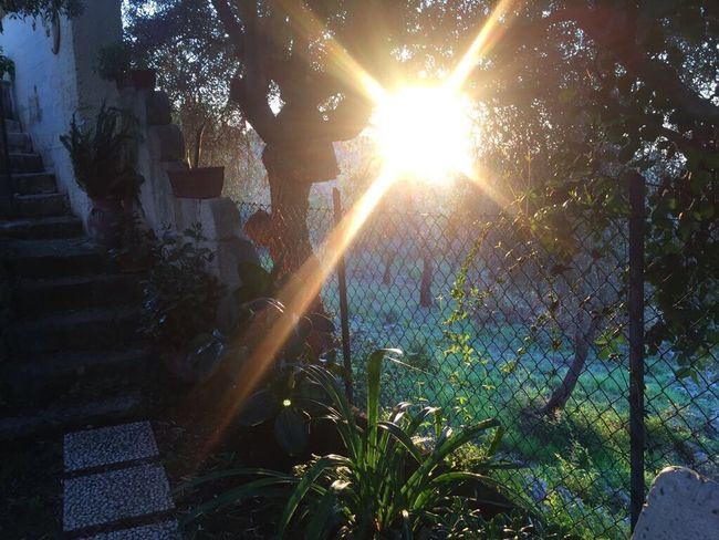Belvedere - Siracusa Sunbeam Sunlight Sun Tree Growth No People Nature Outdoors Day Tranquility Nature Photography Beauty In Nature Tranquil Scene Nature On Your Doorstep Sunset Sunlight Sunset_collection Sunny Be. Ready.