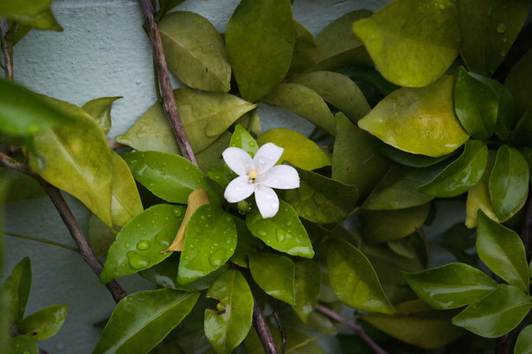 High angle view of flowering plant leaves