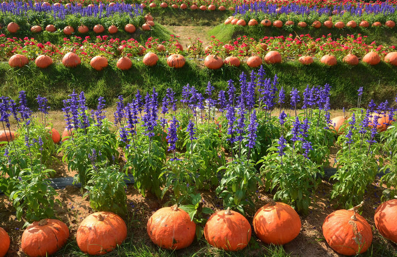 View of multi colored flowering plants in garden