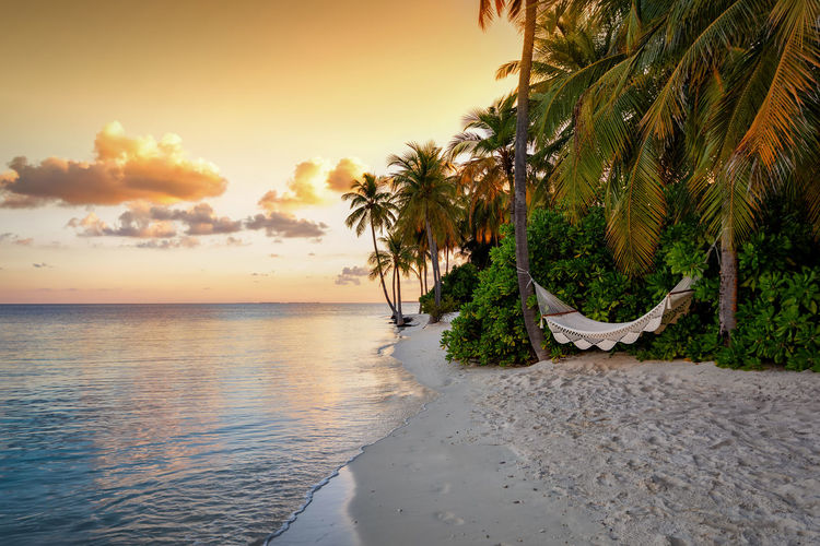 A tropical beach with a hammock under coconut palm trees during sunset on the Maldives Sky Water Sea Palm Tree Sunset Beauty In Nature Scenics - Nature Tree Tropical Climate Beach Tranquil Scene Tranquility Land Plant Nature Cloud - Sky No People Horizon Over Water Horizon Outdoors Coconut Palm Tree Palm Leaf Maldives Hammock Empty Nobody Island Paradise Caribbean Ocean