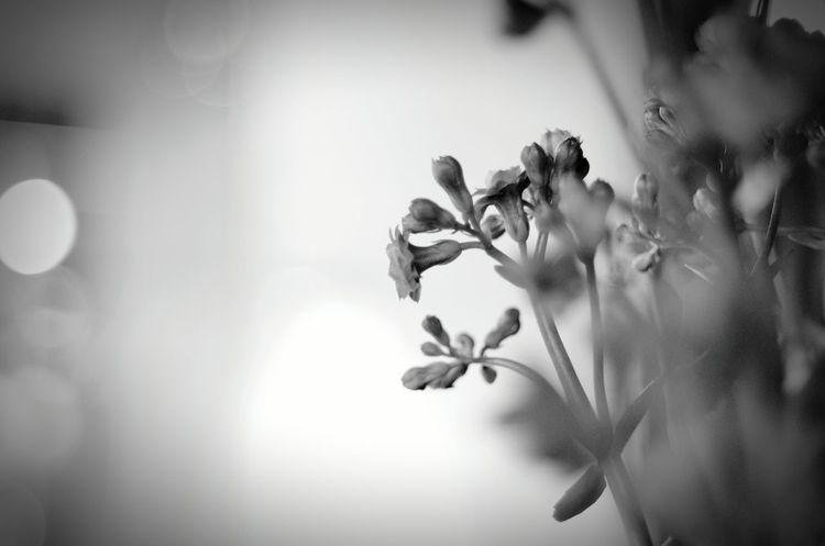 Tokyo night Night Bokeh Lights Black&white Monochrome Black & White Bokeh Love Cityscapes Bokeh EyeEm Bnw Nightphotography Black And White Blackandwhite Light And Shadow Bokeh Photography Tokyo Tokyo Night Flower Flowers