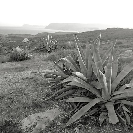 DESERT Deserts Around The World Blackandwhite Photography Landscape_photography camifotografia.com