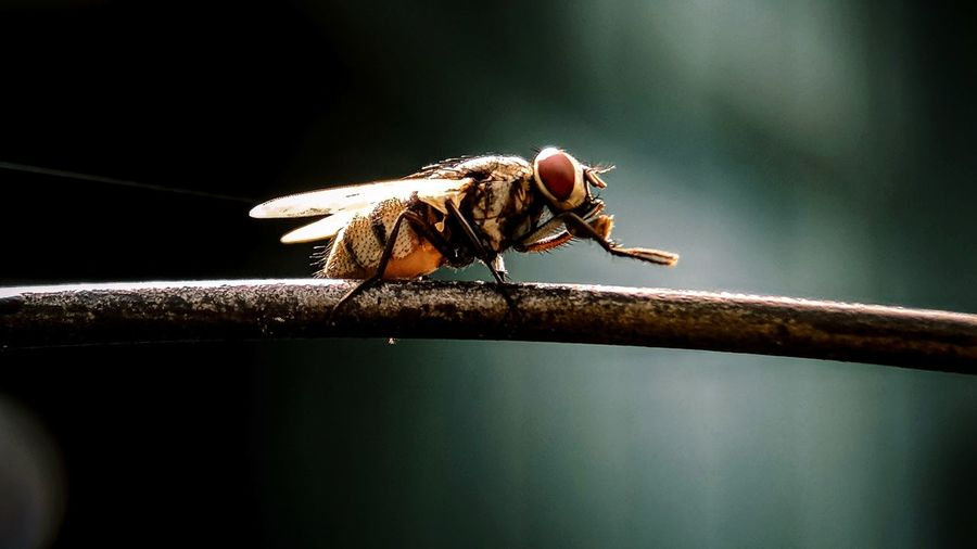 Close-up of fly on railing