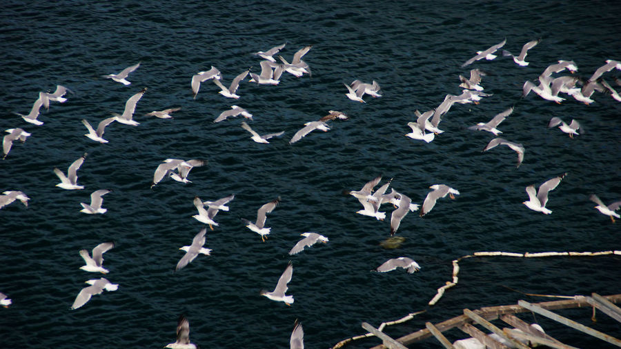 High angle view of seagulls flying over rippled sea