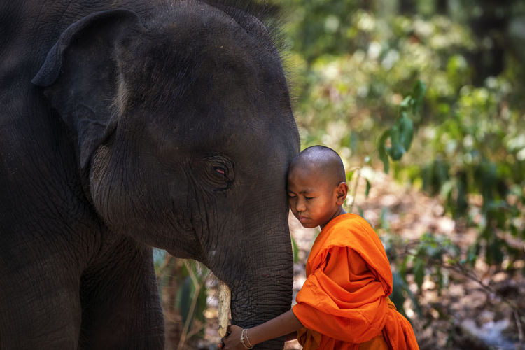 Monk embracing elephant in forest