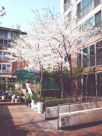 봄도그립고 너도그립다 Miss My Home Natural Beauty