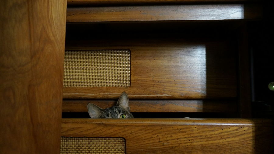 Portrait Of Cat Hiding In Drawer Of Cabinet