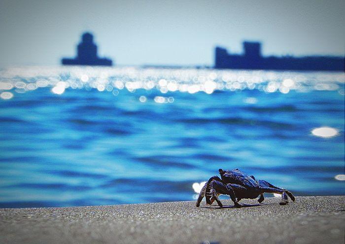 Crab enjoys the view _. Castle Enjoytheview Outdoors Crab Beachview Water Sea