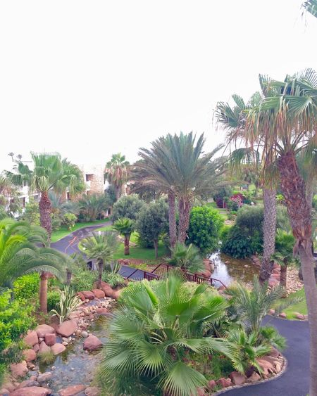 Palm Tree Plant Tropical Climate Africa Morocco Agadir Riu Hotel Hotel Room With A View Landscape Sky Hot Day Summer