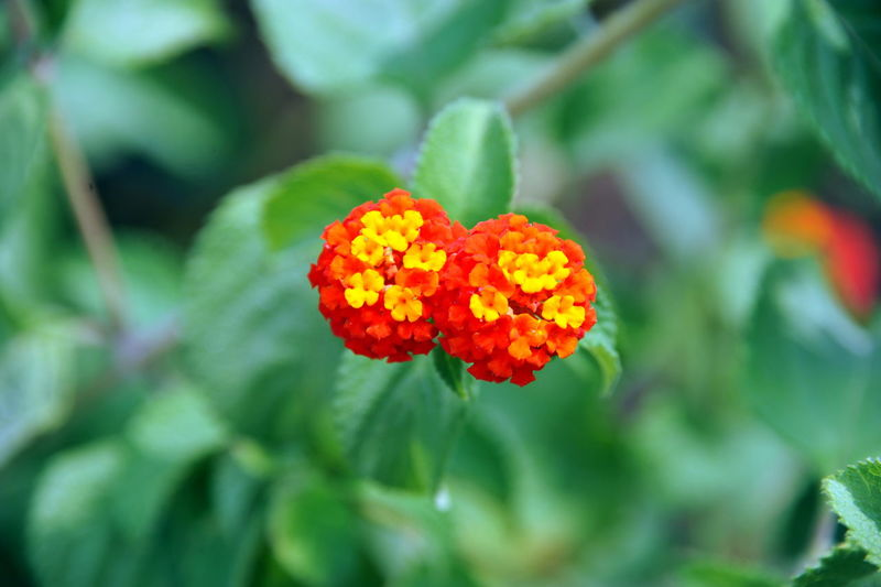 Close-up of orange flowers and leaves