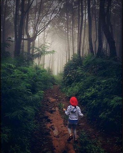 Repost from @julia_aminta Little Red ridding hood in the wood My daughter Adistya Jalandihutan Cikole Woods Wisatatrekking Trekking Lembang Infokbb Bandungbarat BeautifulIndonesia Dheayodiansyah Explorebandungbanget