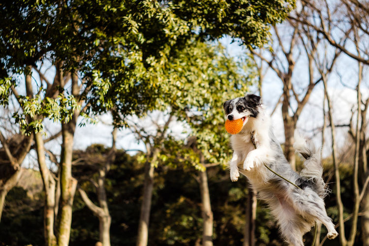 Low angle view of dog jumping against trees