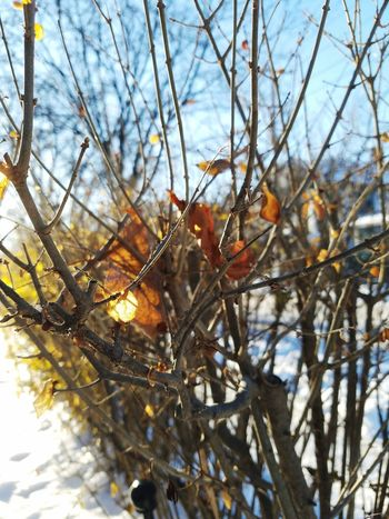 Nature Branch Outdoors Day Beauty In Nature No People Fragility Tree Growth Close-up Sky