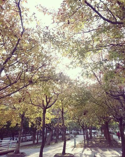 Tree Morning Sunny 楓樹 Light