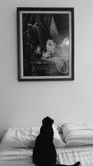 Observando os antepassados... Cats Catsoneyeem