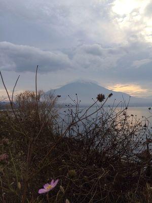 山中湖 富士五湖 富士山 World Heritage