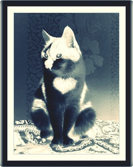 This cat only because of the heart on it's chest I picked to change it around in effects & filters...I found on the Internet. Check This Out Hanging Out Cats