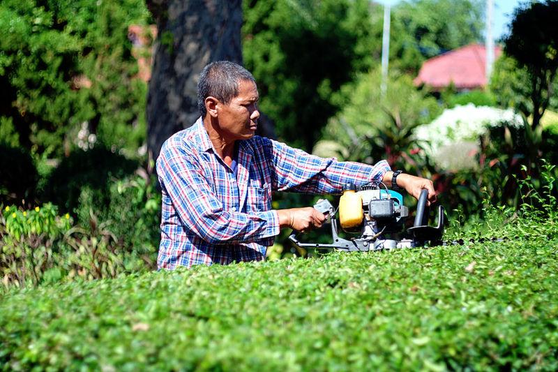 Gardener Trimming Hedge In Yard