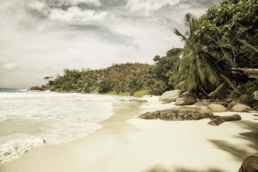 Beach Beauty In Nature Day Nature No People Outdoors Praslin Praslin Seychelles Sand Scenics Sea Seychelles Seychelles Islands Sky Tranquil Scene Tranquility Anse Georgette Travel Photography Tree Water