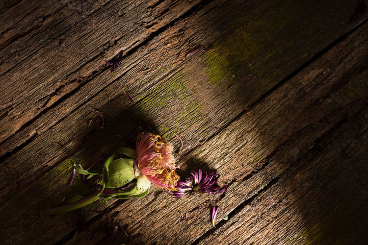 a wilted flower Abstract Contrast Dry Moss Fine Art Flora Lights And Shadows Sorrow Wilted Flower Wooden Texture Fine Art Photography