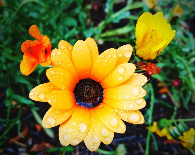 Directly Above Shot Of Dew Drops On Yellow Flower