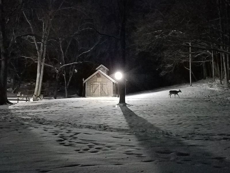 Hidden Group Of Deer Group Of Objects Night Nighttime No People Ohio Park - Man Made Space Park Cabin Shack Deer White Tail Deer Winter Snow Night Cold Temperature Illuminated Outdoors Nature Snowing Tree Weather Mammal Animal Themes Beauty In Nature