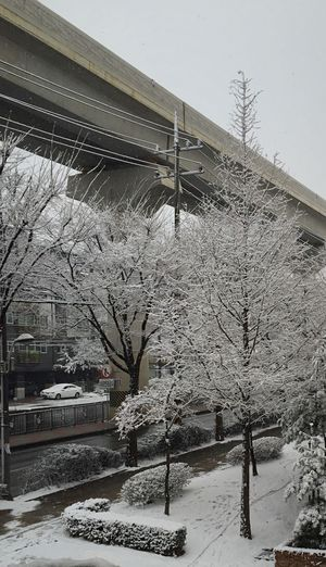 South Korea Snow Winter Cold Temperature Tree Weather Building Exterior Day Stories From The City