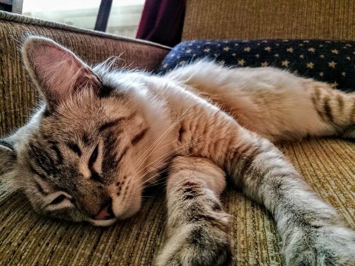 One Animal Animal Themes Pets Domestic Animals Domestic Cat Relaxation Sleeping Close-up CatSema Sema Cats Of EyeEm City Of Kazakhstan