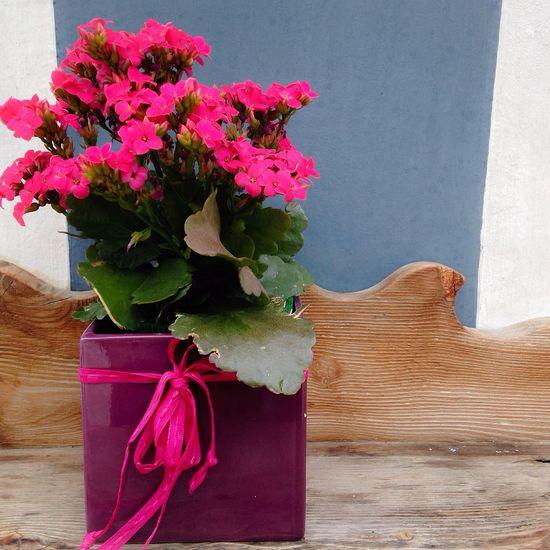 Contrasti Flower Colors Dolomites, Italy Kalanchoe