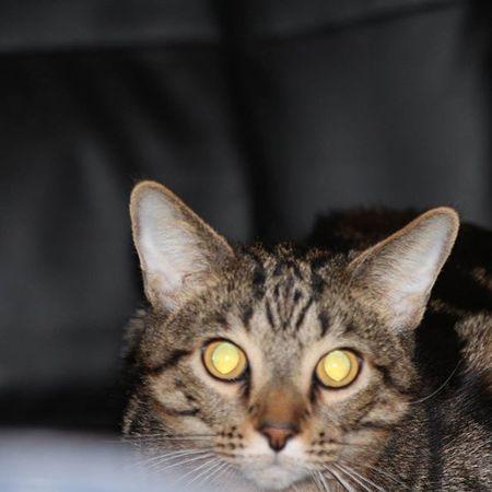Vincenzo Paulo Cat Evil Kitty Furkid