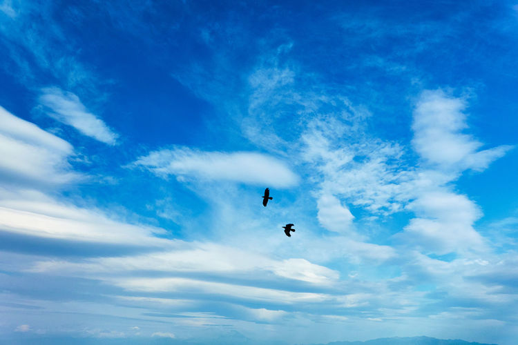Low angle view of birds flying gainst blue sky