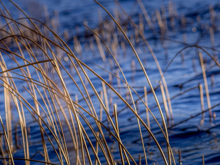 Close-up of dry grass on the beach