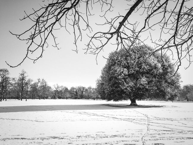 """""""There is a pleasure in the pathless woods."""" Greenwich Park, London, on a snowy day. monochrome photography Monochrome Black And White Photography Black And White Snowy Day Snowy Snowfall Snow Winter Background Winter Trees Winter Landscape Winter London Park Field Snowy Field Trees Tree Oak Tree Blackheath Nature Tree Outdoors Clear Sky Day Flock Of Birds Landscape Branch No People Sky"""