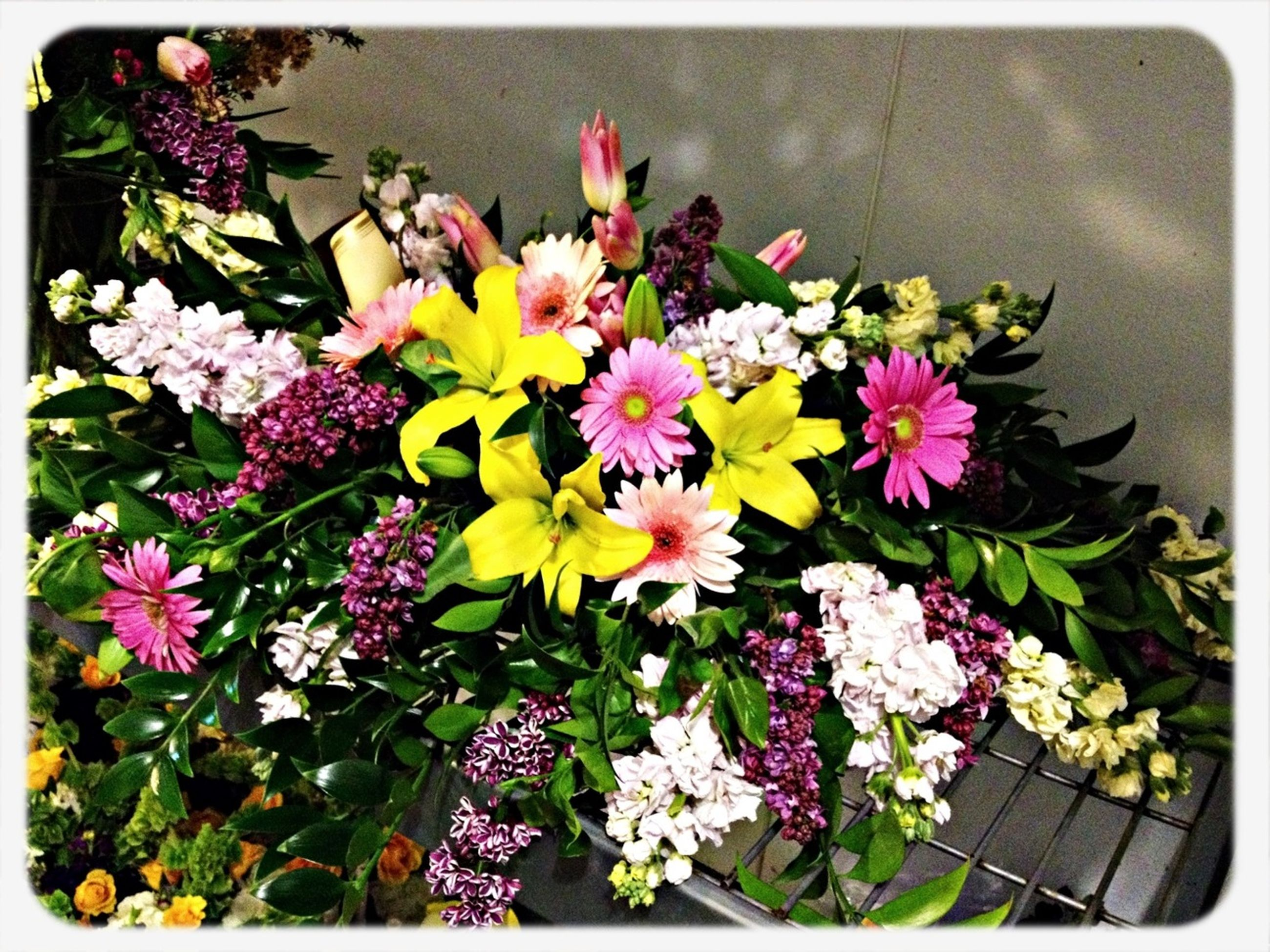 transfer print, flower, auto post production filter, freshness, fragility, petal, multi colored, flower head, high angle view, variation, beauty in nature, growth, pink color, plant, blooming, nature, bouquet, abundance, bunch of flowers, leaf