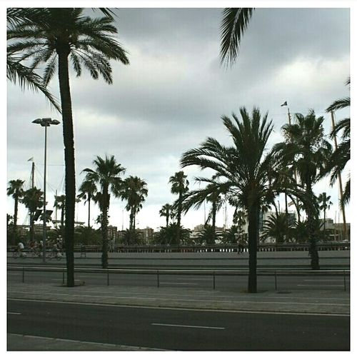 Spain Palm Tree Tree No People Cloud - Sky Outdoors Sky Day palm Holidays Fire Escape Real People Clock Built Structure Low Angle View One Person Human Body Part Close-up Balcony Adults Only Only Men Architecture Girls Building Exterior Personal Perspective High Angle View Standing