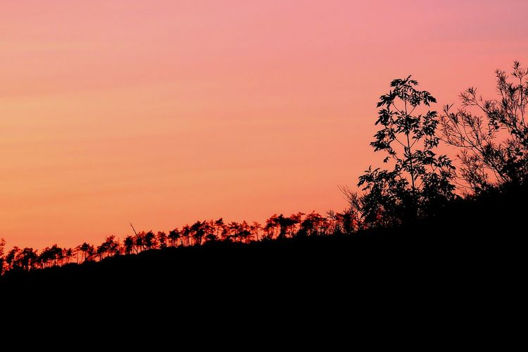 Sunset Silhouette Orange Color Tree No People Beauty In Nature Outdoors Nature Sky Scenics Day EyeEm Selects Fujixt1 Fujifilm_xseries Fuji X-T1 Xt1 Fuji Xt1 Fuji Beauty In Nature Tree Silhouette Nature Landscape Tranquility Hill