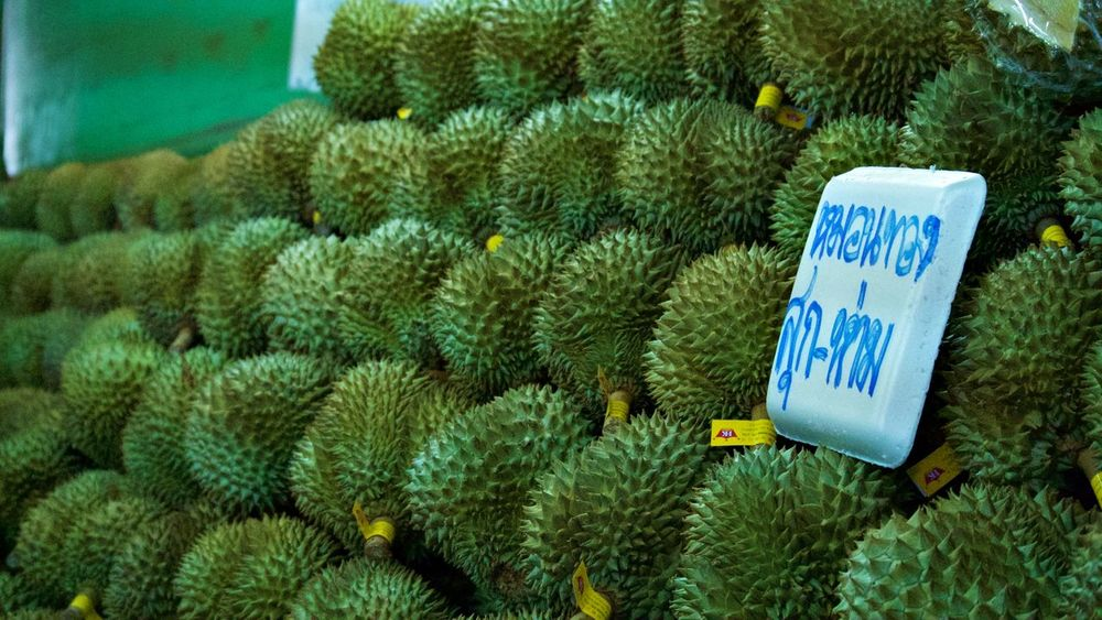 Beauty In Nature Blue Close-up Day Durian Durians Fruit Fruits Green Green Color Growing Growth Information Nature No People Outdoors Plant