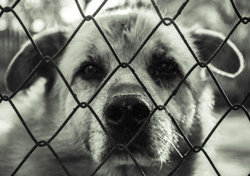 Animal Themes Cage Chainlink Fence Close-up Day Full Frame Mammal Metal Nature No People One Animal Outdoors Protection Safety Sky
